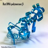 Patchareebhorn_Rat DNA polymerase_Physical Model